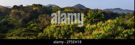 Vue panoramique sur la canopée de la forêt tropicale en plein soleil, dans le parc national de Soberania, province de Colon, République du Panama. Banque D'Images