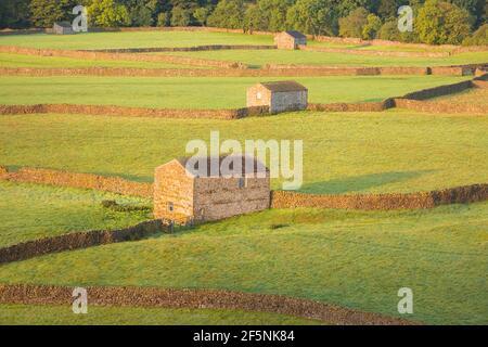 Lumière dorée sur les vieilles granges en pierre, murs en pierre du village de Gunnerside dans le paysage rural de la campagne anglaise du Yorkshire Dales N