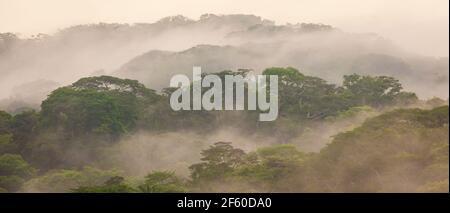 Vue panoramique sur la forêt tropicale luxuriante et brumeuse du parc national de Soberania dans la lumière du matin, République du Panama. Banque D'Images