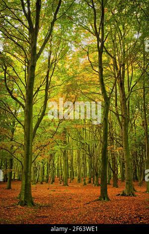 Royaume-Uni, Yorkshire du Sud, Barnsley, Wombwell Wood