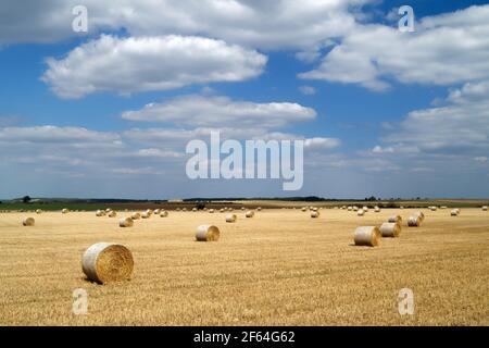 Royaume-Uni, Yorkshire du Sud, Doncaster, balles de foin de fût dans le champ près de High Melton