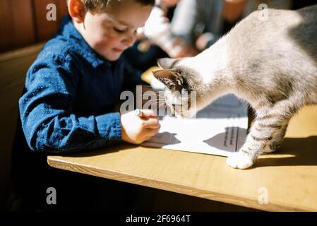 Petit garçon et son chat faisant leurs devoirs ensemble à table au soleil