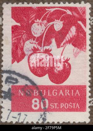 Timbre de la cession de la philatéliste de Gösta Bodman, commencé 1950.le timbre de Bulgarie, 1956. Motifs de fraises. 'Série de fruits'.