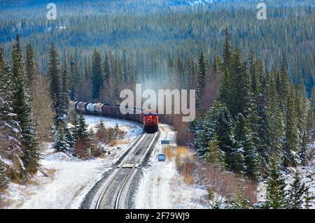 Un train de marchandises canadien National chargé de wagons qui se déplacent à un coin de rue dans une région boisée des montagnes rocheuses de l'Alberta Canada.
