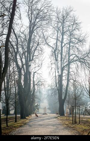 Vue d'hiver brumeuse le matin sur le parc de Ljubljana Tivoli. Des gens sur une promenade et une statue d'un garçon est vu en arrière-plan.