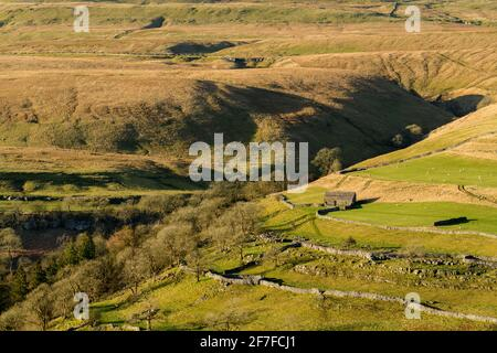 Paysage pittoresque et ensoleillé de Wharfedale (coquillages de montagne, grange en pierre, colline escarpée, murs de calcaire, pâturages de pâturage de moutons) - Yorkshire Dales, Angleterre, Royaume-Uni.