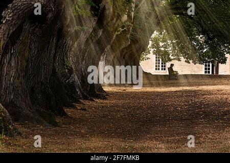 Une personne assise paisiblement dans une allée bordée d'arbres avec des rayons du soleil qui filtrent à travers les feuilles, Abbaye de Noirlac, cher, France, Europe