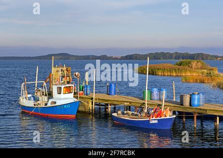 Bateaux de pêche amarrés le long de la jetée en bois à Neu Reddevitz, Lancken-Granitz sur l'île Rügen / Ruegen, Mecklembourg-Poméranie occidentale, Allemagne