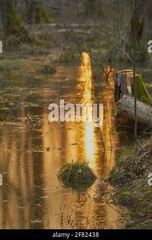 Une flaque dans le marais dans laquelle la lumière de le soleil se reflète Banque D'Images