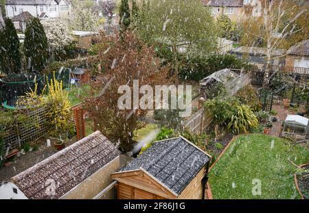 Merton, Londres, Royaume-Uni. 12 avril 2021. Chutes de neige abondantes dans les banlieues sud-ouest de Londres le jour où de nombreux magasins et entreprises rouvrent après le confinement de Covid-19. Crédit : Malcolm Park/Alay Live News Banque D'Images
