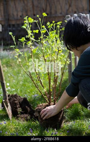Plantez un arbre et un buisson dans le jardin.