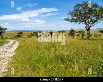 Parc national du Serengeti, Tanzanie, Afrique - 29 février 2020 : arbre dans les prairies du Serengeti