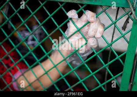 16 avril 2021, Dhaka, Bangladesh : un patient Covid-19 portant des gants en plastique attend à l'intérieur d'un trois roues pour être admis au Dhaka Medical College. Le nombre de décès d'une journée atteint trois chiffres pour la première fois dans le pays, le nombre total de décès s'élève aujourd'hui à 10,182. C'était la cinquième fois au cours des sept derniers jours que le pays a battu son record pour la plupart des décès de Covid-19 en une seule journée. (Image de crédit : © Sultan Mahmud Mukut/SOPA Images via ZUMA Wire) Banque D'Images