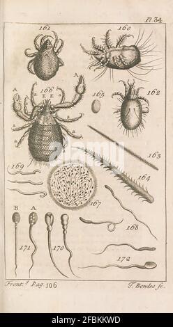 Micrographia Illustrator Londres,imprimé pour l'auteur,1771