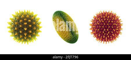 Ensemble de grains de pollen isolés sur blanc. L'allergie au pollen est également connue sous le nom de rhume des foins ou de rhinite allergique.