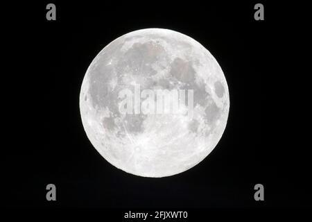 27 avril 2021. Londres, Royaume-Uni. Photo de Ray Tang. La première Supermoon rose apparaît dans le ciel tôt le matin. Une Superlune se produit lorsque la pleine Lune en même temps que la Lune est à (ou près) périgée. Cela le rend plus grand de 14 % et plus lumineux de 30 % qu'une pleine Lune à l'apogée