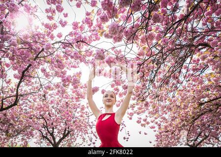 Londres, Royaume-Uni. 29 avril 2021. Journée internationale de la danse : l'ARIA Tilah, étudiant à l'Académie royale de danse, se produit parmi les magnifiques cerisiers en fleurs de Greenwich Park lors de la Journée internationale de la danse. Célébrée pour la première fois en 1982, la Journée internationale de la danse a lieu chaque année depuis l'anniversaire de la naissance de Jean-Georges Noverre (1727-1810), considéré comme le créateur du ballet moderne. Credit: Guy Corbishley/Alamy Live News