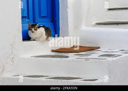Chat perché au seuil d'un bâtiment blanchi à la chaux avec porte et escalier bleus, Mykonos, Grèce