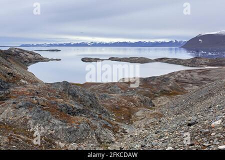 Vue sur Hornbaekpollen / Hornbækpollen, petite baie à Liefdefjorden, à l'est d'Erikbreen, Haakon VII Land en été, Spitsbergen, Svalbard, Norvège