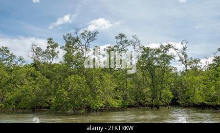 Croisière le long de la rive aérienne de Sibu Laut-Telaga, Matang, Sarawak, Malaisie