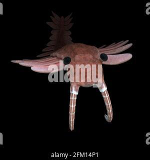 Anomalocaris, créature de la période cambrienne, isolé sur fond noir