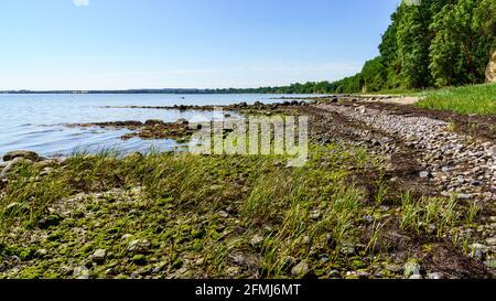 La côte de la mer Baltique à Eulenkrug près de Boltenhagen, Mecklembourg-Poméranie occidentale, Allemagne