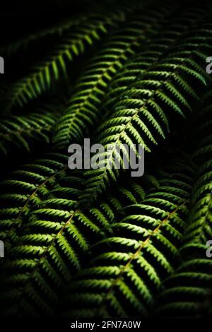 L'art noir et vert sur les subtilités et les détails trouvé dans les feuilles de fougères tropicales