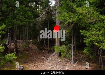 accueil satellite plat rouge installé sur un arbre de conifères dans la forêt