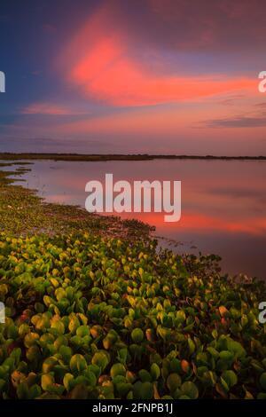 Ciel coloré au coucher du soleil au bord du lac de Refugio de vida Silvestre Cienage las Macanas réserve naturelle, province de Herrera, République du Panama.