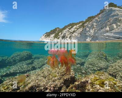 Méduses colorées dans la mer et la côte rocheuse, vue partagée sur et sous la surface de l'eau, Méditerranée, Costa Blanca, Javea, Alicante, Valence