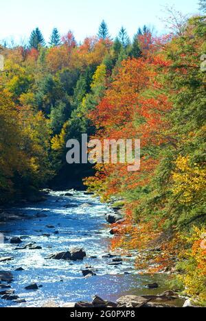 Des couleurs vives sont visibles sur les feuilles d'arbres qui changent en automne le long de la rivière Blackwater dans le parc national de Blackwater Falls, en Virginie occidentale.