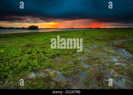 Ciel spectaculaire au coucher du soleil au bord du lac de Refugio de vida Silvestre Cienage las Macanas réserve naturelle, province de Herrera, République du Panama.