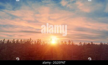 Le soleil se lève sur la forêt de pins