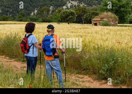 Randonneurs marchant entre les champs de la Pla de Masroig (Bages, Barcelone, Catalogne, Espagne) ESP: Senderistas andando entre campos (Cataluña, España)