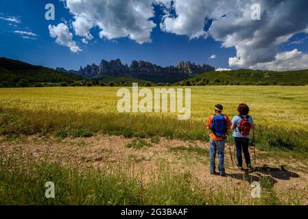 Randonneurs marchant entre les champs de la Pla de Masroig, avec la montagne de Montserrat en arrière-plan (Bages, Barcelone, Catalogne, Espagne)