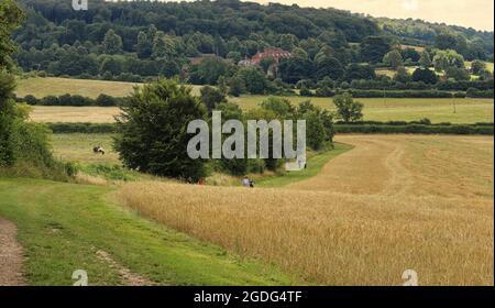 Un paysage rural anglais avec une piste entre les champs dans la colline Chiltern à Buckinghamshire