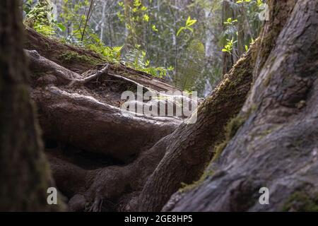 un vieux arbre torsadé est à la base d'une forêt par beau temps