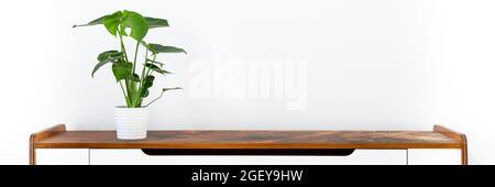 Jeune Monstera deliciosa ou usine de fromage suisse dans un pot en céramique blanche sur un panneau latéral rétro contre mur blanc. Des plantes exotiques à la mode comme le ho moderne