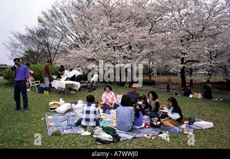 Le Japon, l'île de Honshu, la région de Kinki, Kyoto, pique-nique dans un jardin public sous les cerisiers en fleurs Banque D'Images