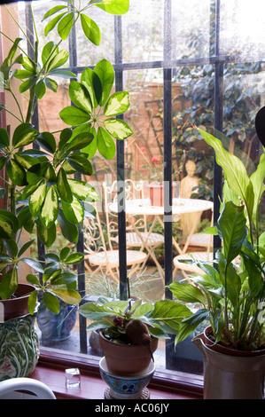 Plantes d'intérieur on windowsill avec barres de sécurité Banque D'Images