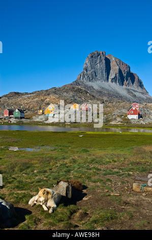 Groenland chien devant le village de Ikerasak, randonnée, du Groenland, de l'Atlantique Nord Banque D'Images