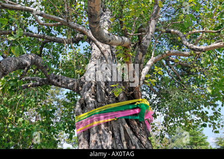 Morceaux de tissu nouée autour d'un arbre de Bodhi, Wat Arun (temple de l'aube), Bangkok, Thaïlande, Asie du Sud Banque D'Images