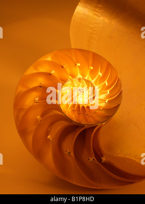 Nautilus Shell traversée dans la moitié montrant le genre Nautilus Nautilus Pompilus chambres Banque D'Images