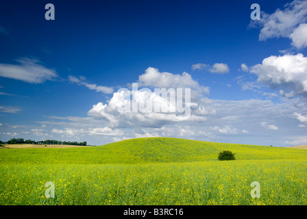Paysage d'été saturés - vue sur prairie. L'Europe, Pologne. Adobe RGB (1998). Banque D'Images