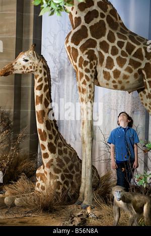Garçon debout sous une girafe Banque D'Images