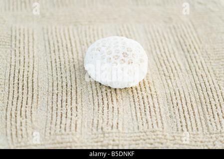 Morceau de corail sur le sable ratissée, still life Banque D'Images