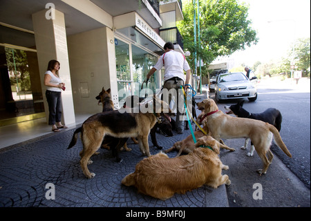 L'ARGENTINE, Buenos Aires, dog walker dans le district de Belgrano Banque D'Images