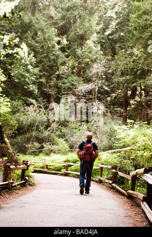 Sequoia Forest en Californie Banque D'Images