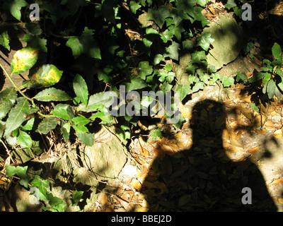 L'ombre de l'homme dans les bois Banque D'Images