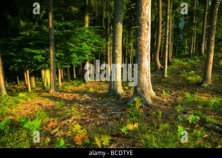 Sombres Forêts sauvages des couleurs saturées. Banque D'Images